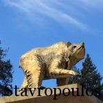 Golden Bear